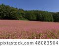 Red Soba no Sato / Minowa-cho Nagano Prefecture 48083504