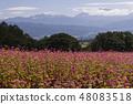 Red Soba no Sato / Minowa-cho Nagano Prefecture 48083518