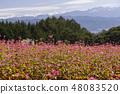 Red Soba no Sato / Minowa-cho Nagano Prefecture 48083520