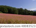 Red Soba no Sato / Minowa-cho Nagano Prefecture 48083523