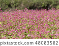 Red Soba no Sato / Minowa-cho Nagano Prefecture 48083582
