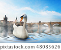 Swan in foggy morning 48085626
