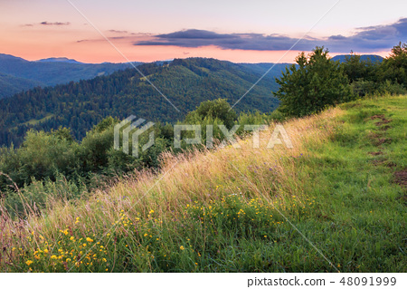 grassy slope on a hill at dawn 48091999