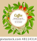 coffee vector frame 48114314