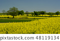 Springtime in Roztocze, Poland with rape flowers 48119134