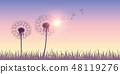 dandelion silhouette with flying seeds on sunrise background 48119276