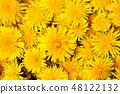 Dandelion flowers background pattern 48122132