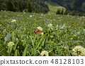 Butterfly on a flower in Bavarian mountains 48128103