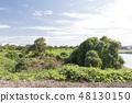 야생 조류의 숲 48130150