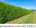 Long green hedge with a lawn and blue sky background. 48135825
