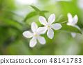White inda flower  48141783