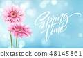 Gerbera Flower Background and Spring time Lettering. Vector Illustration 48145861