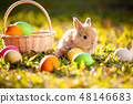 Cute little bunny and easter eggs in the meadow 48146683