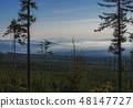 View of summer morning mountains, blue misty slopes of mountains in the distance. Tall pine trees 48147727
