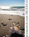 Seashell on the beach under blue sky 48150315