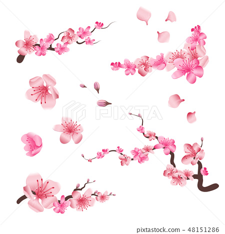 Spring sakura cherry blooming flowers, pink petals and branches vector set for your own design 48151286