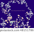Colorful little chrysanthemum flower illustration 48151786