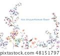 Colorful little chrysanthemum flower illustration 48151797