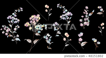 五顏六色的小小菊花花卉插畫 48151802