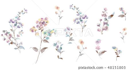 五顏六色的小小菊花花卉插畫 48151803
