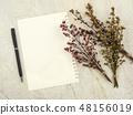 Bouquet of dried Gypsophila flowers for decoration 48156019