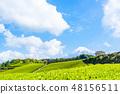 【靜岡縣】富士山和茶園 48156511