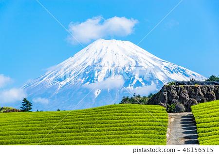 [靜岡]富士山和茶園 48156515
