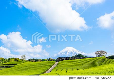 【靜岡縣】富士山和茶園 48156522