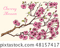 Japanese Sakura, Blooming cherry, magnolia or almond. Wild Flowers with leaves. Wedding plant with 48157417