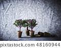 꽃 양배추 회색 배경 48160944