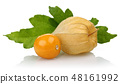 Physalis fruit or golden berry and leaf isolated 48161992