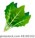 菠菜 48180162