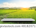 背景 农场 水稻 48182071