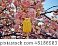 Cherry-blossomed roasted corn 48186983