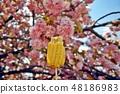 겹벚꽃에 구운 옥수수 48186983