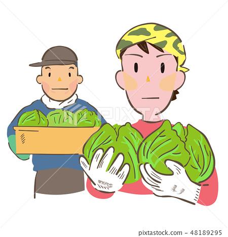 一個人用被收穫的圓白菜 48189295