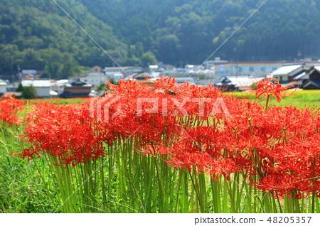 교토 피안 꽃의 마을 48205357