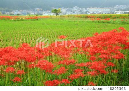 교토 피안 꽃의 마을 48205368