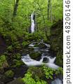 Fresh green, Yunii's waterfall (Aomori) 48206146