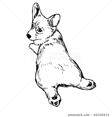 Pembroke Welsh Corgi Dog 48206914
