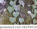 心脏标记树叶子 48209419