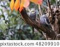 坎贝尔镇野生鸟类森林 48209910