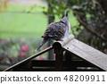 坎贝尔镇野生鸟类森林 48209911