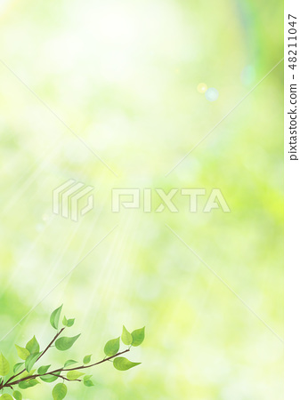 Fresh green - leaves - green - backlight - refreshing - flares - sunlights 48211047