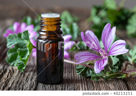 A bottle of common mallow essential oil  48213251