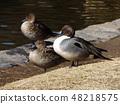 今年還來了冬候鳥 48218575