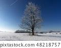 Frozen tree in winter nature 48218757