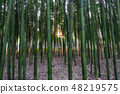 Simnidaebat bamboo forest Sunset 48219575