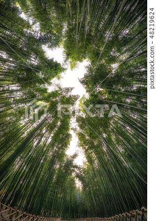 Taehwagang park Simnidaebat bamboo forest 48219624