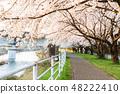 Cherry blossom row along the river 48222410